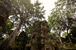 The jungle temple of Ta Prohm, Siem Reap