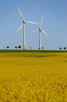 Beautiful landscape with windmills and rapeseed fields, Tågarp
