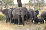 Elephants, Tarangire National Park