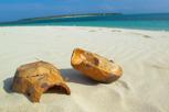 Coconuts, Zanzibar