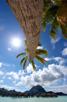 Bright sun and palms at paradise island of Bora Bora