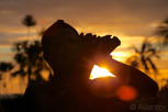 Sunset horn of native Tahitian, Papeete