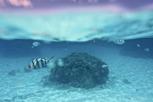 Underwater wildlife, Bora Bora