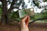 The signature Tembusu tree at the Botanic Gardens as pictured on the 5 dollar note
