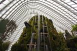 The cloud forest at Garden by the Bay