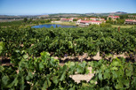 Wineyards at Asara Wine Estate