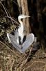 Heron, iSimangaliso Wetland Park
