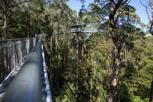 The Otway Treetop Walk, Victoria