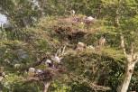 African sacred ibis, Mlilwane Wildlife Sanctuary