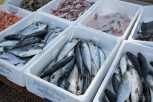 Fish market, Budva