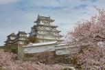 Himeji Castle amongst the cherry blossom, Himeji
