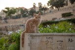 One of many homeless cats, Beirut