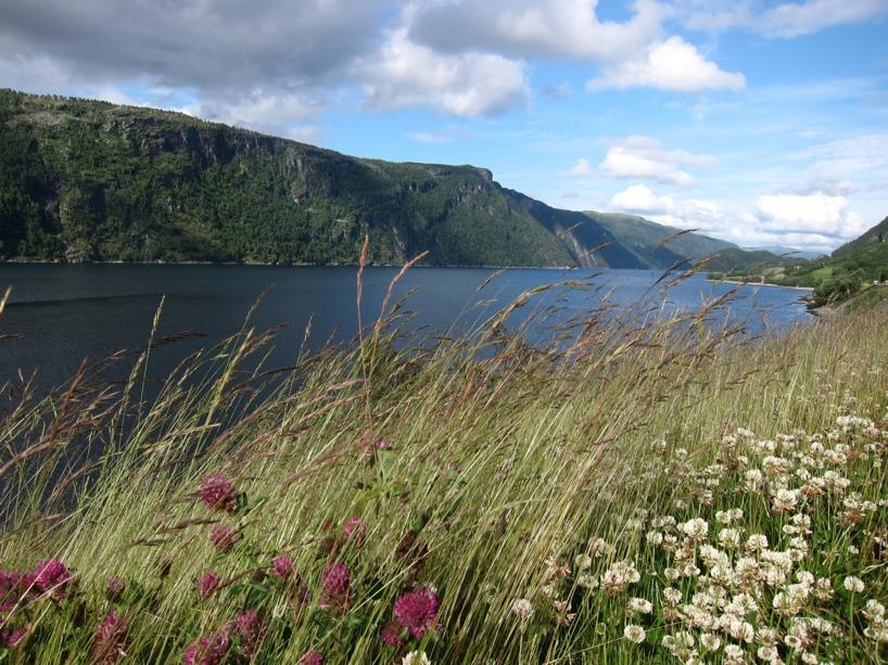 En fin vy över fjorden