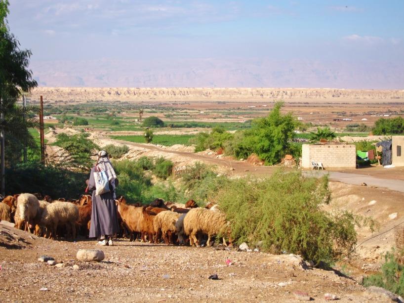 En herde passerade förbi med sitt boskap =)