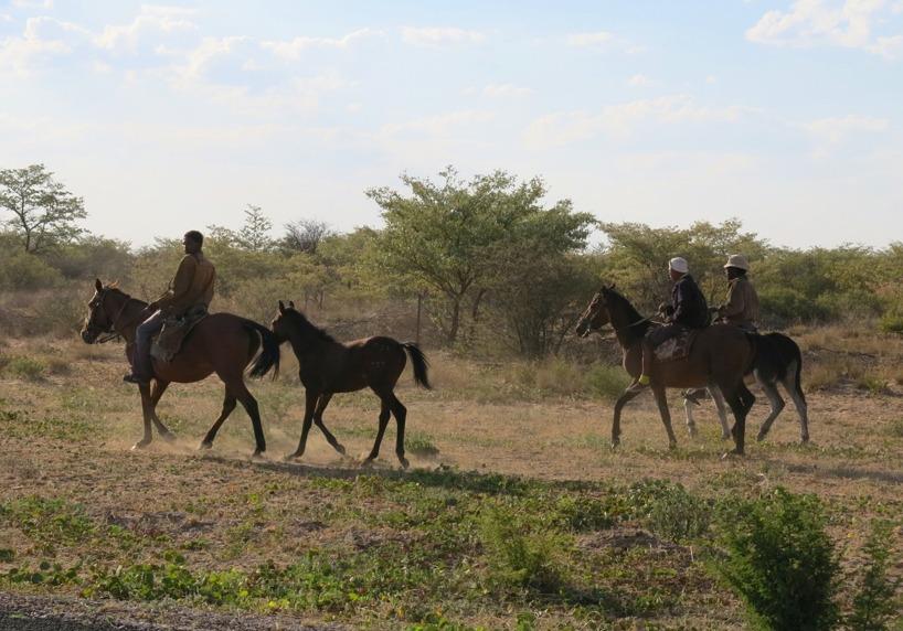 När vi ko närmare Namibia fick vi en känsla av Vild västern då människorna drev sitt boskap på ryggen av ståtliga hästar!