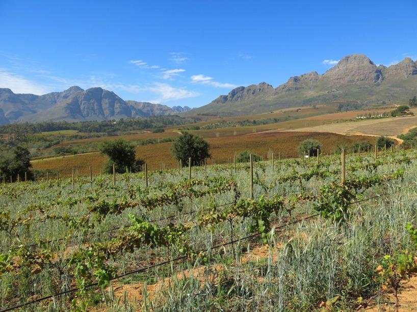 I vackra Stellenbosh började vi vår vintur