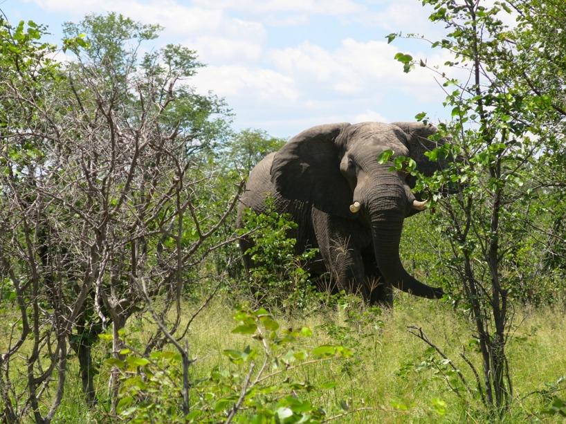 Såg en elefantfamilj på fördmiddagen!