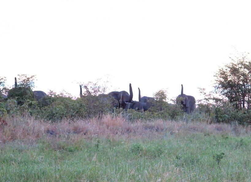 Elefanterna som vädrade efter en förlorad medlem i flocken°