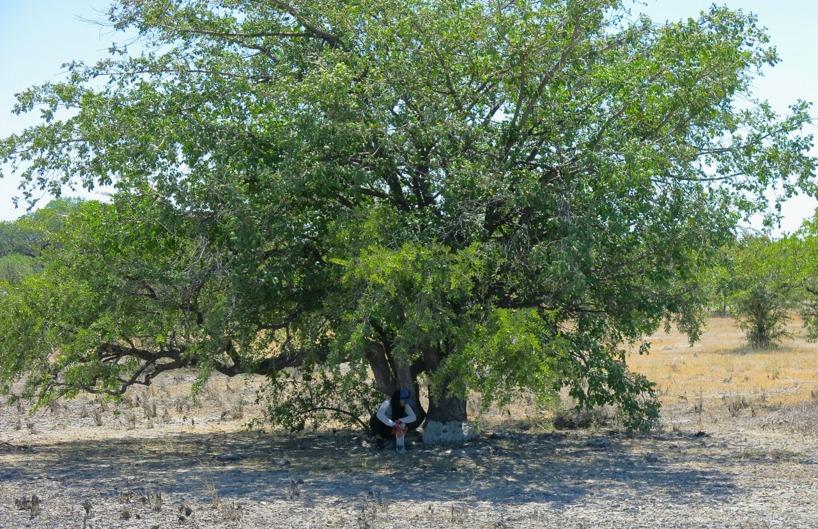 Åter i sadeln igen! Lite fika under ett träd för att söka skydd från solen...