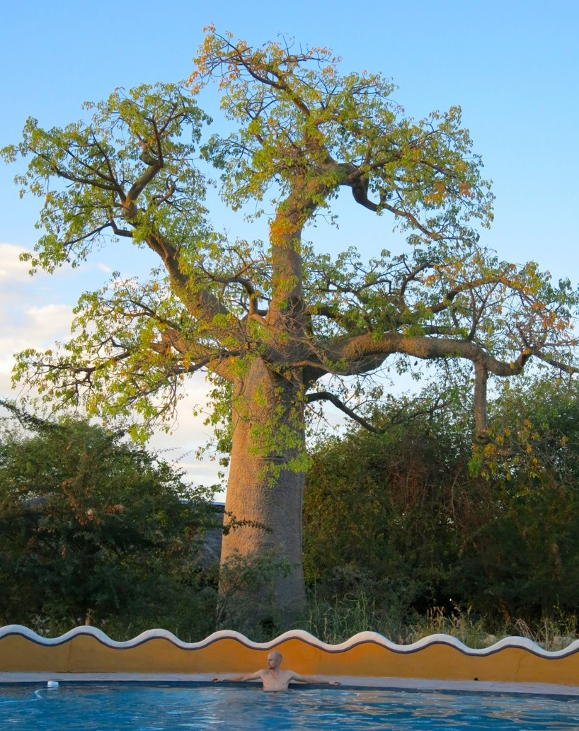 Ännu ett vackert Baobab!