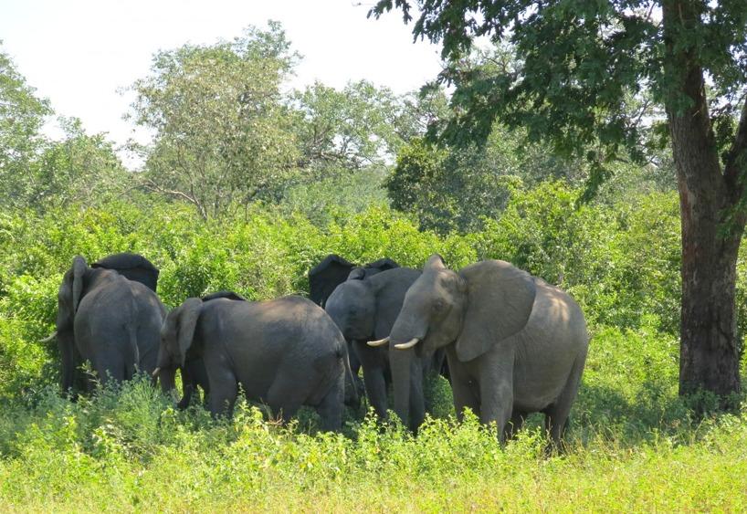 Det tog inte mer än 15km innan vi såg elefanter på håll och när vi kom närmare åkte kameran fram!
