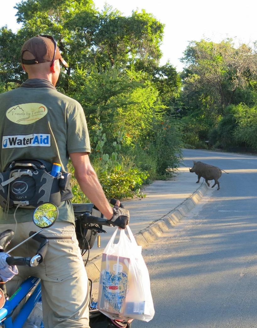 Handlat lite mat och påväg till Chobe Safari Lodge och då såg vi dessa vildsvin!