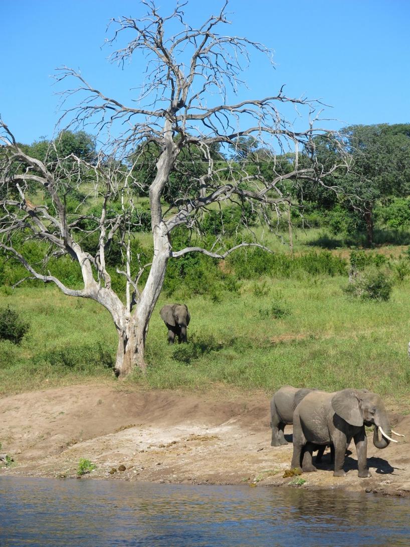 Elefanter är mäktiga djur!