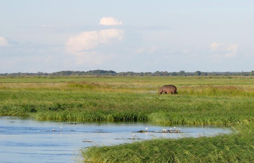 Påväg tillbaka till Lodgen och en flodhäst som vågat sig upp ur vattnet!