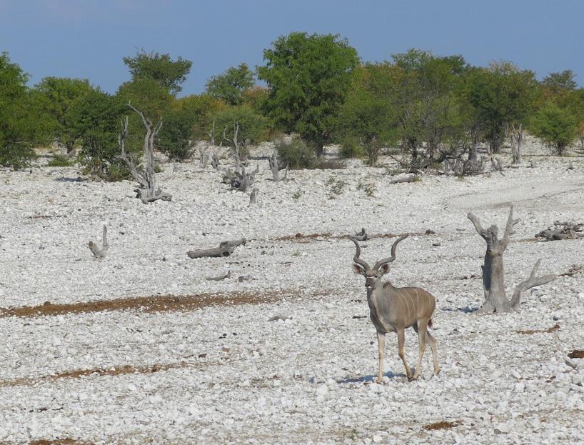 Äntligen lite ledig tid att åka på en ordentlig safari!