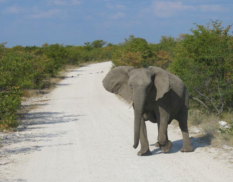 På väg till Lodgen och lite elefanter på vägen
