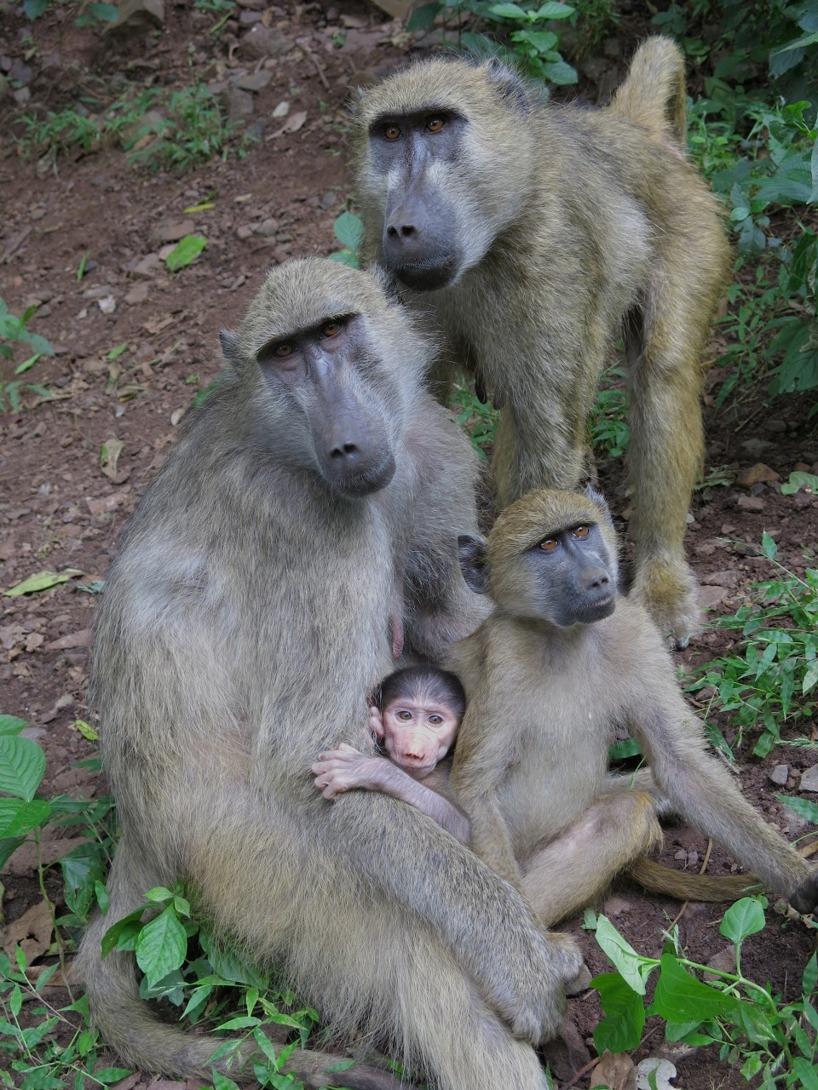 I nationalparken fanns det babianer som utforskade turisterna =)