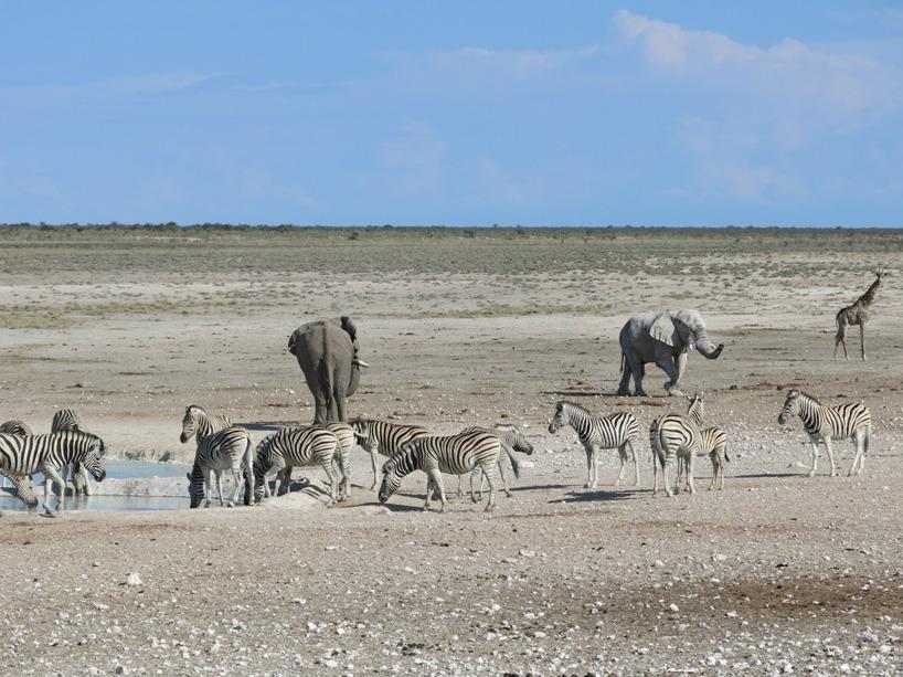 Etosha nationalpark!