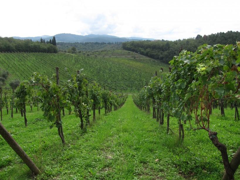 Vinrankorna klättrade längs Toscanas kullar i sina ståtliga rader!