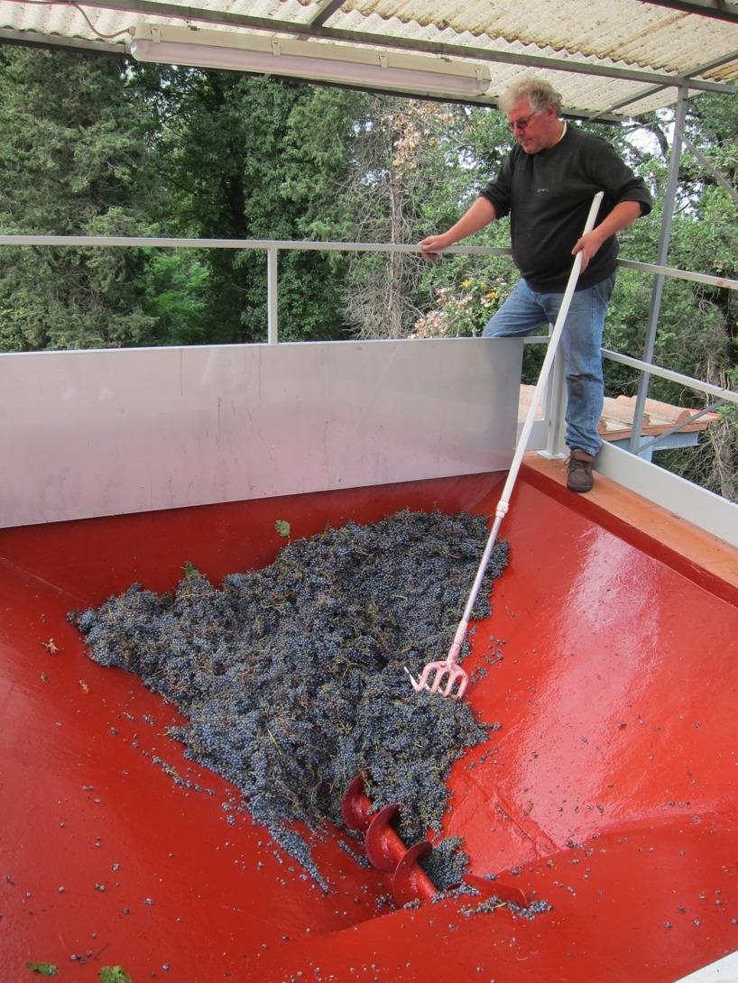 I denna process frigörs stjälkarna från druvorna. Det man ha kvar är skalet, saften och kärnorna.