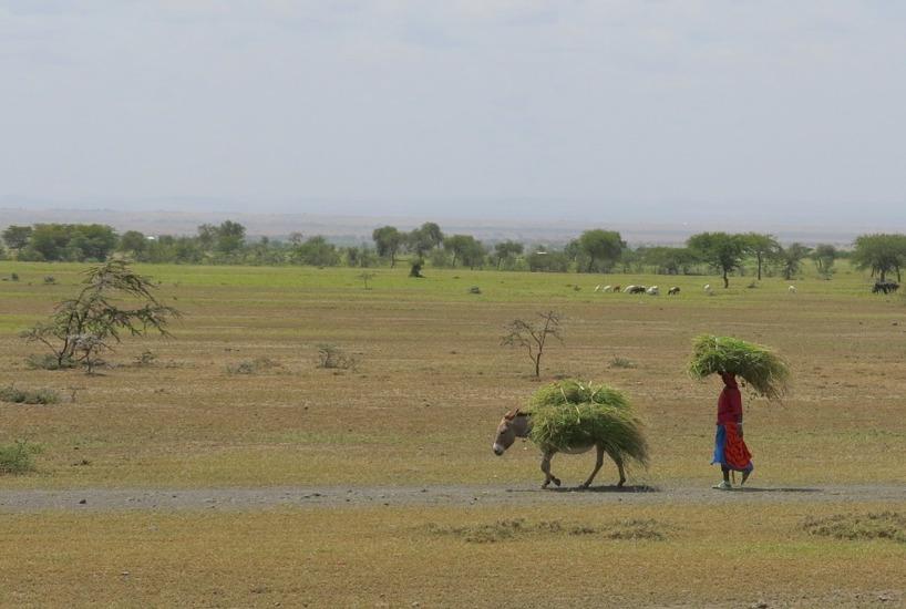 Kvinnorna i Tanzania är minst sagt arbetsmyror!