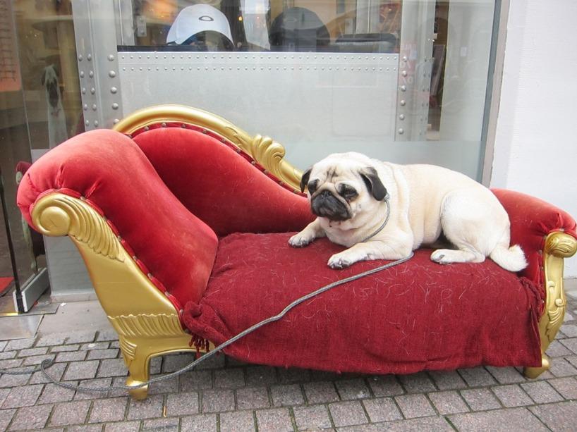 Sötaste hunden utanför en butik i Flennsburg. Haha!