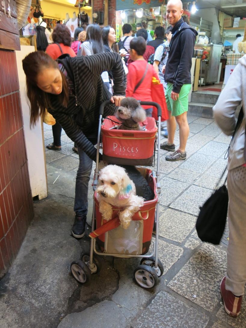 Det gäller att husdjuren får se Taiwans turistattraktioner också =)