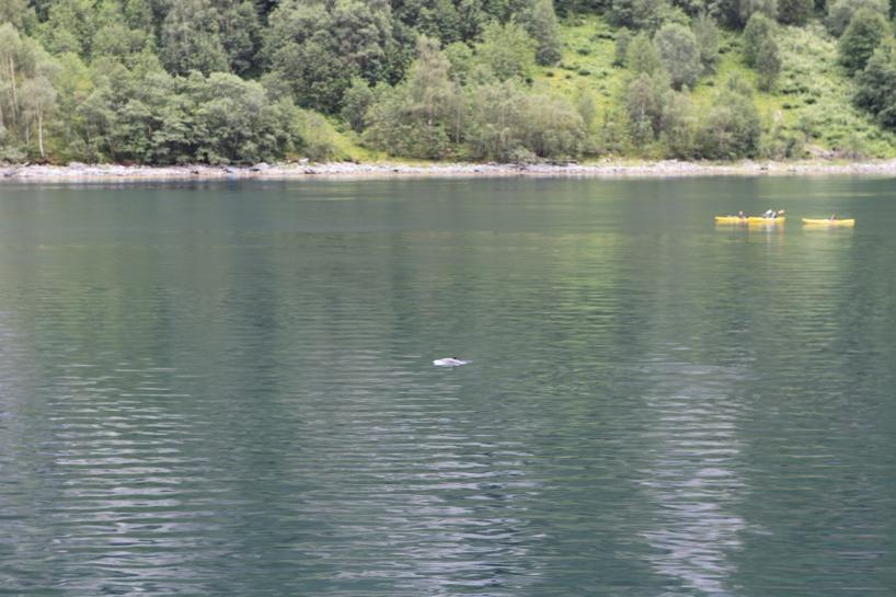 En tumlare tog oss sällskap bredvid båten... EXOTISKT =)