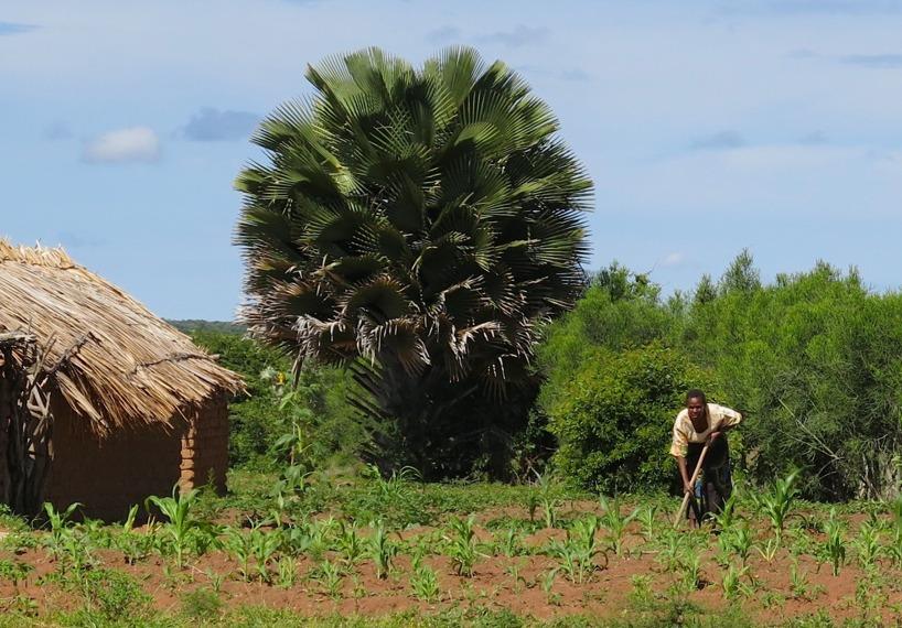 Kvinnorna arbetar i Afrika! Det är en sak som är säker!