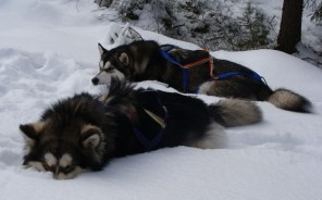 Vi älskar snö!...
