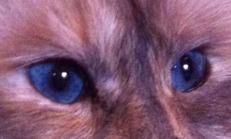 Lyckliga Blå Ögon - Happy Blue Eyes
