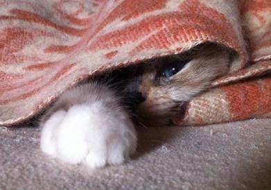 Sova under filtar är mys på högsta nivå