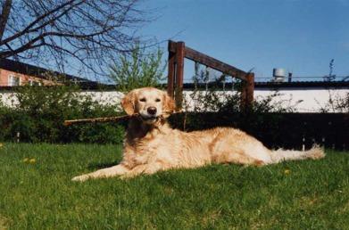 Reedbanks The Snow Queen (Amanda) -  min lydigaste, goaste, underbaraste en på miljonen hund - som blev 10år 1993-2003