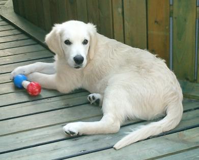 Reedbanks Kiri -  som endast fick bli 6 månader :'(           2006-2006
