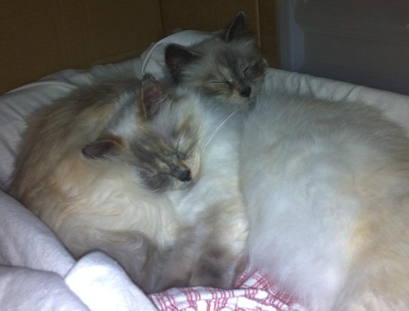Akira använder mamma Nelly som kudde 2015-12-20