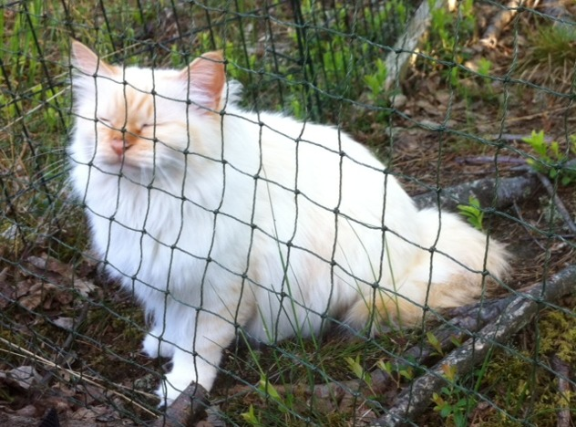 Prillan njuter i kattgården