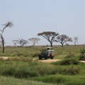 defender in serengeti