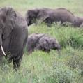 elefant i blomsteräng