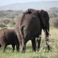 elefantrumpa