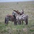 zebra radar